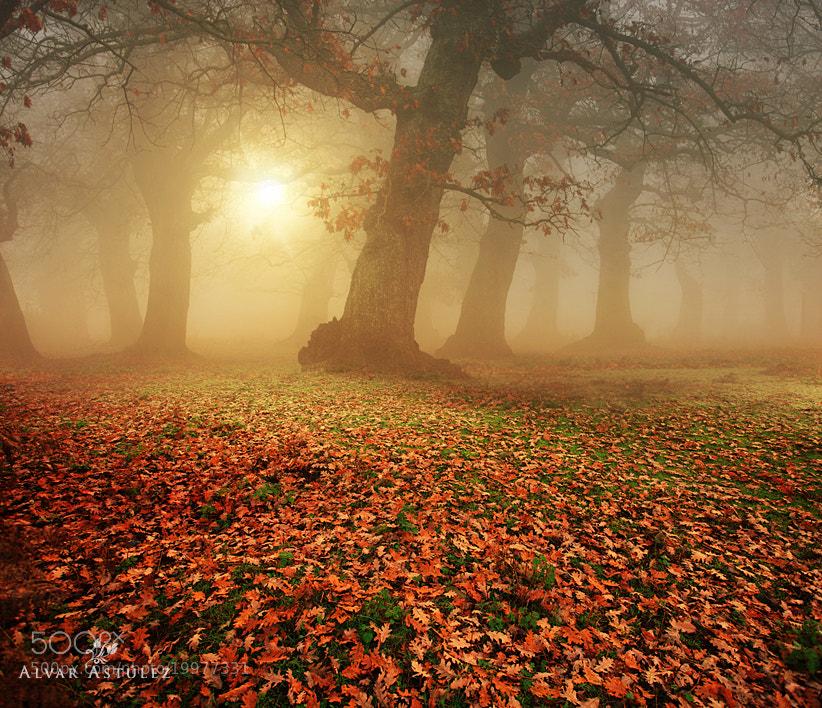 Photograph Autumn in the forest by Alvar Astúlez on 500px