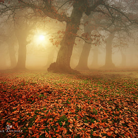 Autumn in the forest by Alvar Astúlez (alvar_astulez)) on 500px.com