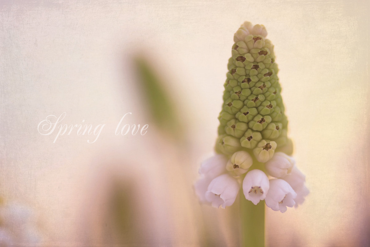 Photograph Spring love by Andrea Kamal on 500px