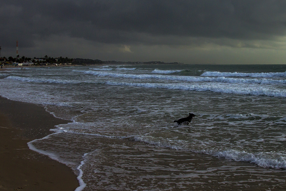 Photograph Surfer Dog by Pedro Corrêa on 500px