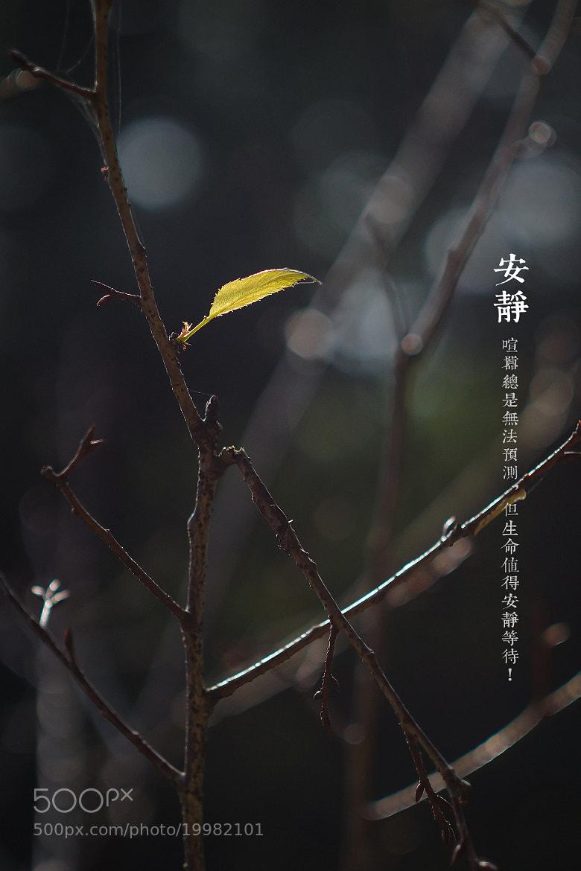 Photograph 安靜 by 阿民 曾 on 500px