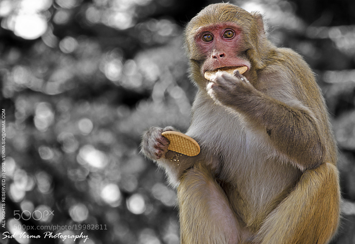 Photograph I'm on a diet!! by Sid Verma on 500px