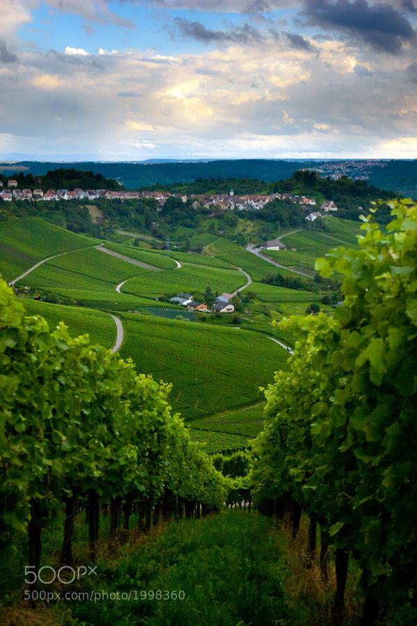 Vineyard in the fall of Stuttgart, Germany by Oleg Milyutin (Oleg_Milyutin)) on 500px.com