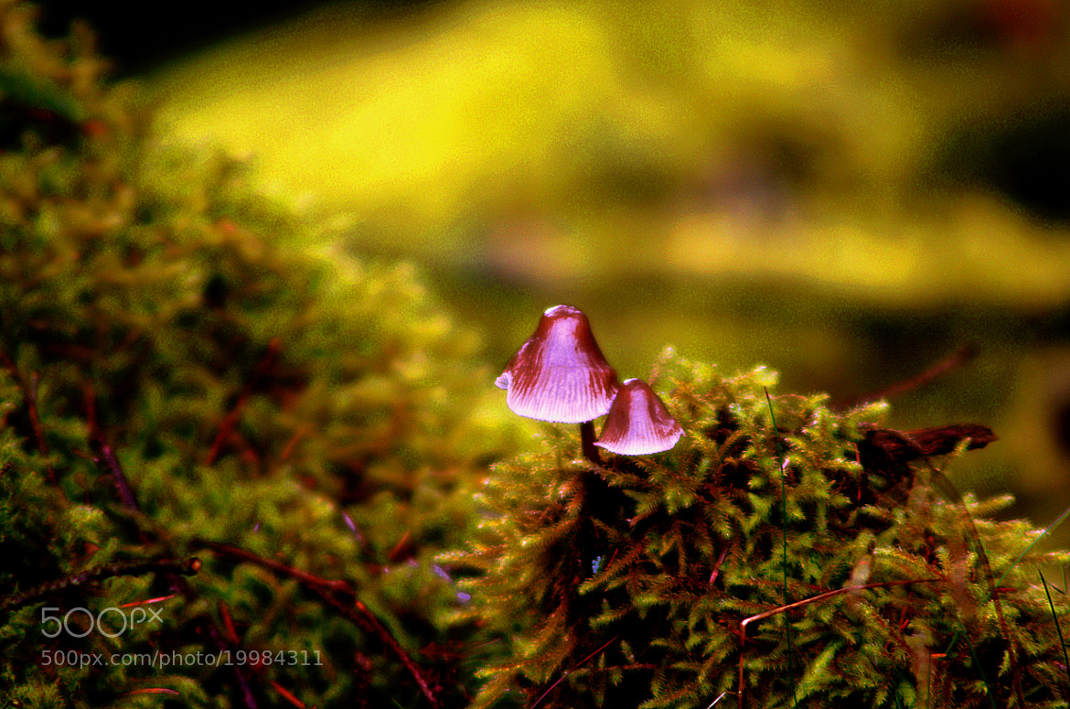 Photograph in moss by jacek tomczak on 500px