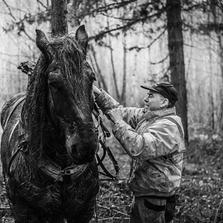 Débardage dans les forêts de Wallonie