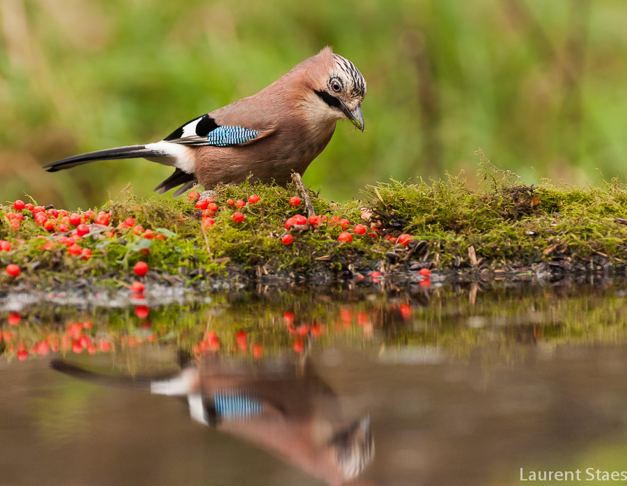 Photograph Jay III by Laurent Staes on 500px