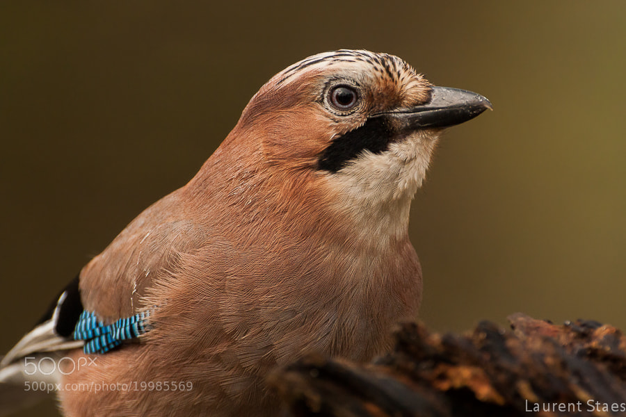 Photograph Jay IV by Laurent Staes on 500px