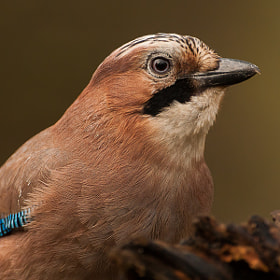 Jay IV by Laurent Staes (laurentstaes)) on 500px.com