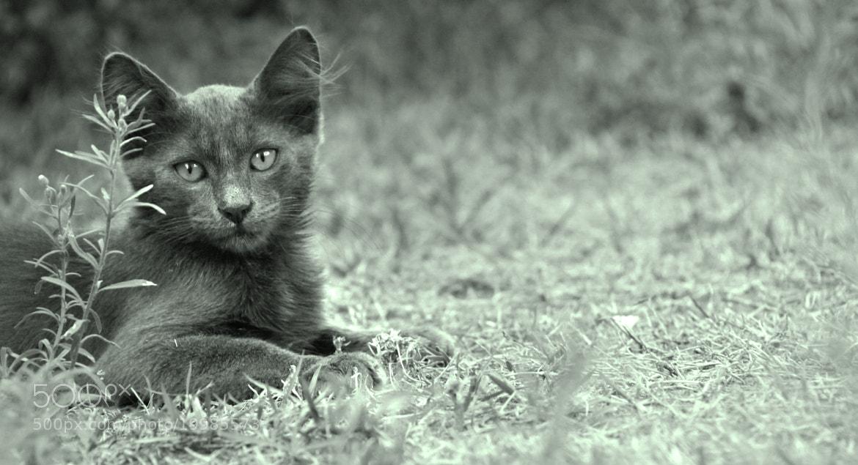 Photograph Black cat by Steve Kotler on 500px