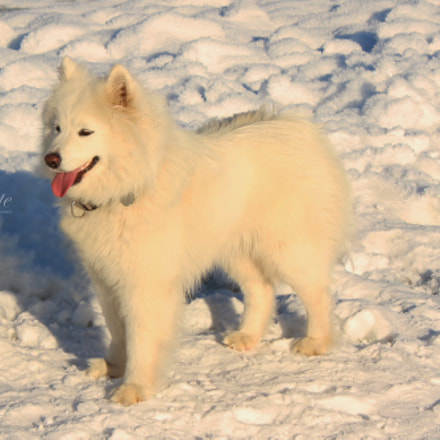 White, whiter ... dog & snow ..., Canon EOS 1200D, Canon EF-S 18-55mm f/3.5-5.6 III