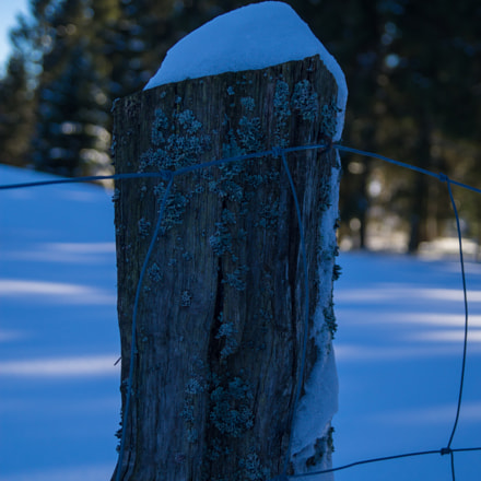 fence with snow, Sony SLT-A37, DT 18-55mm F3.5-5.6 SAM