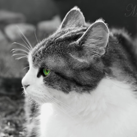 Mysterious cateyes ..., Canon EOS 1200D, Canon EF-S 18-55mm f/3.5-5.6 III