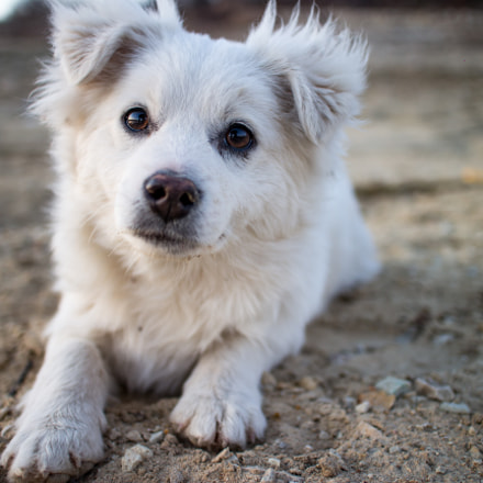 white dog, Canon EOS M, Canon EF-M 22mm f/2 STM