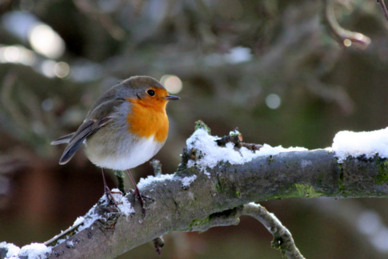 Photograph First snow for this little by Marion Doescher on 500px