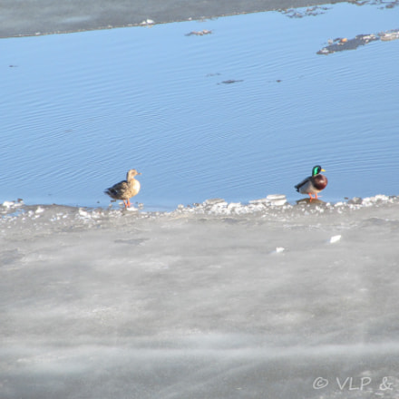The Duck's, Canon POWERSHOT SX150 IS