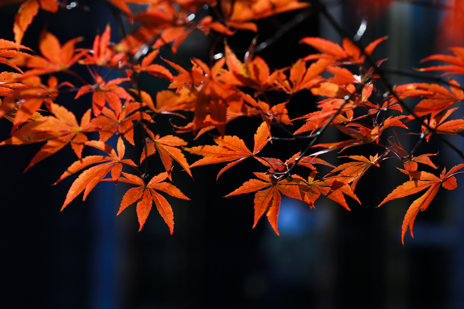 Photograph red leaves by jacky mao on 500px