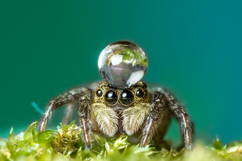Photograph Spider-2. by OKAWA โอ๋กะหว้า. somchai on 500px