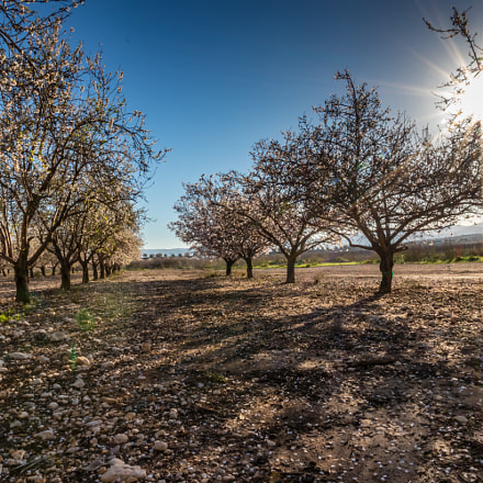 Almonds trees, Canon EOS 80D, Canon EF-S 15-85mm f/3.5-5.6 IS USM