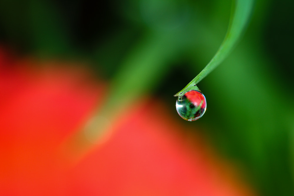 Photograph dewdrop on grass by Alain Frieden on 500px