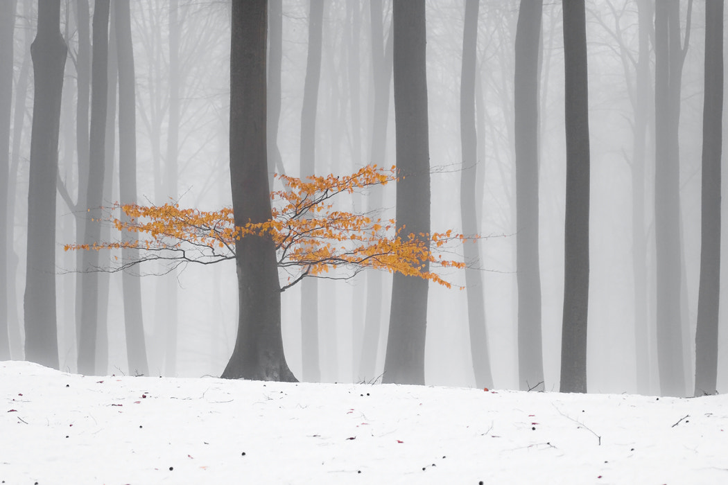 Photograph Winter contrast by Leszek Paradowski on 500px