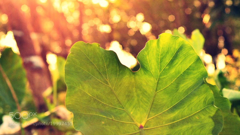 Photograph Leaf Margin II by Navin Anirudhan on 500px
