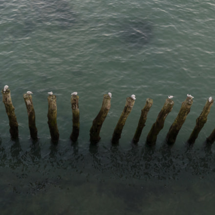 Birds resting on Breakwaters, Sony SLT-A65V, Sony DT 18-250mm F3.5-6.3 (SAL18250)