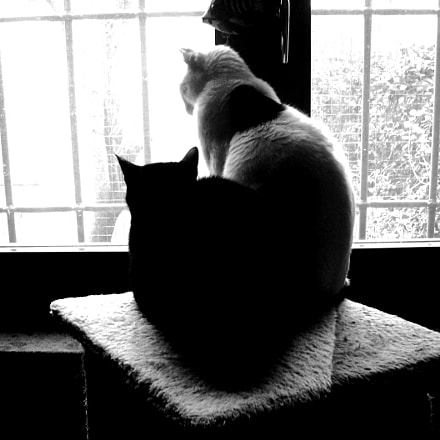 Marvin and Tommy, Nikon COOLPIX L11
