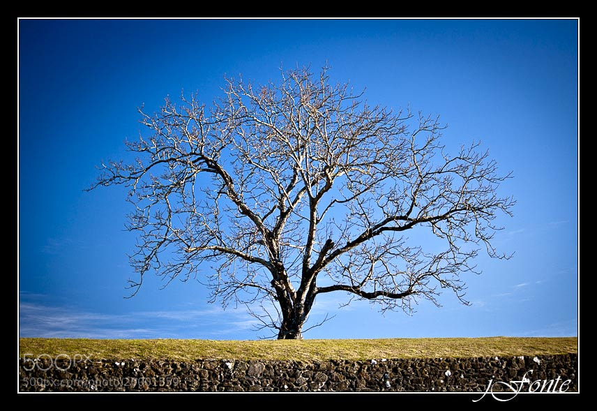 Photograph Lone Tree by Jose Fonterosa on 500px