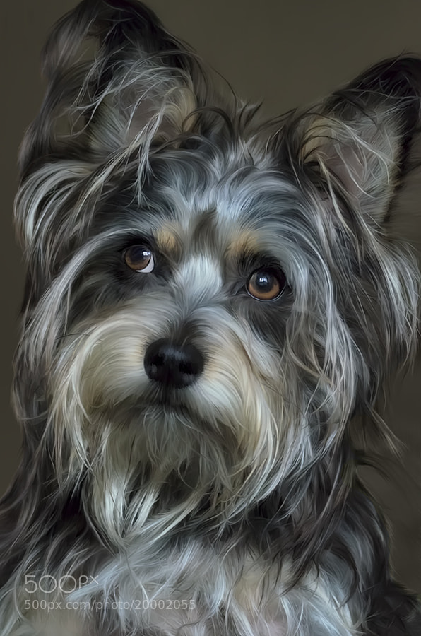 This is a digital painting of my daughter's dog, Kihei.