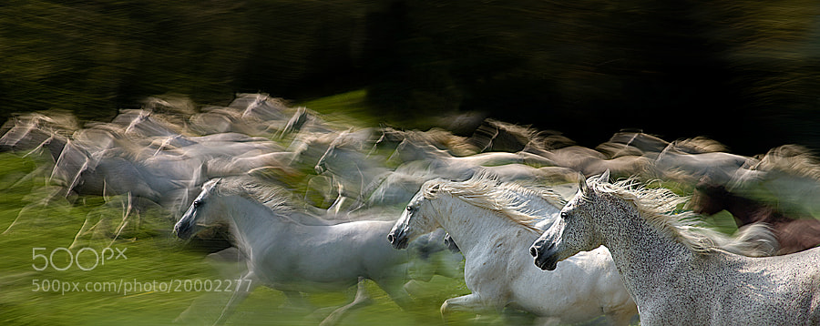 Photograph in gallop by Milan Malovrh on 500px