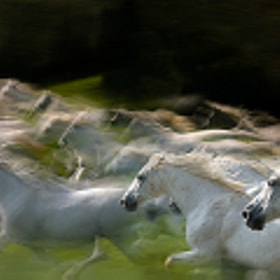 in gallop by Milan Malovrh (elfot)) on 500px.com