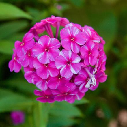 Macro Flower RO