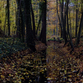 Silent water in autumn 01 by Winfried von Esmarch (WinfriedvonEsmarch)) on 500px.com