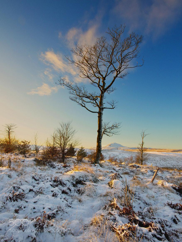 Photograph Tall Tree by Simon Cameron on 500px