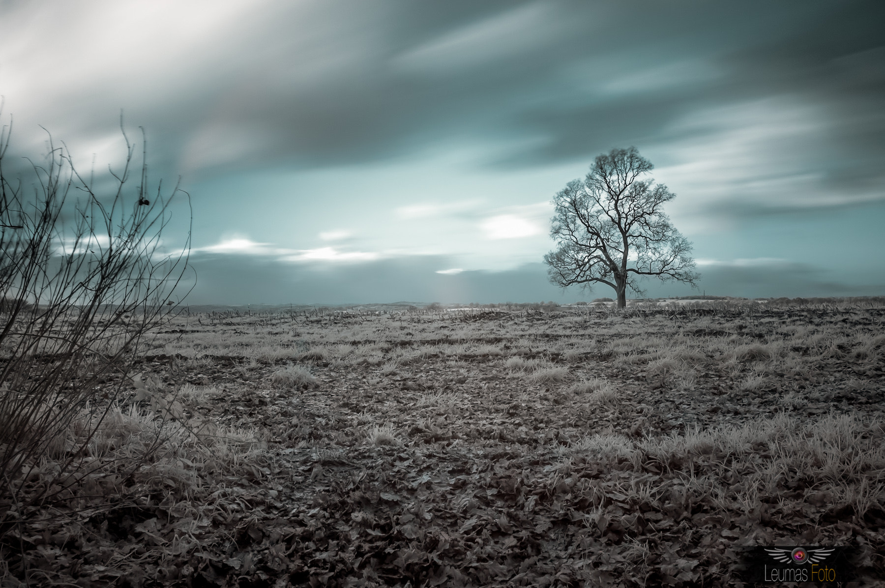 Photograph Infrared Landscape & Tree by Sam Bentley on 500px