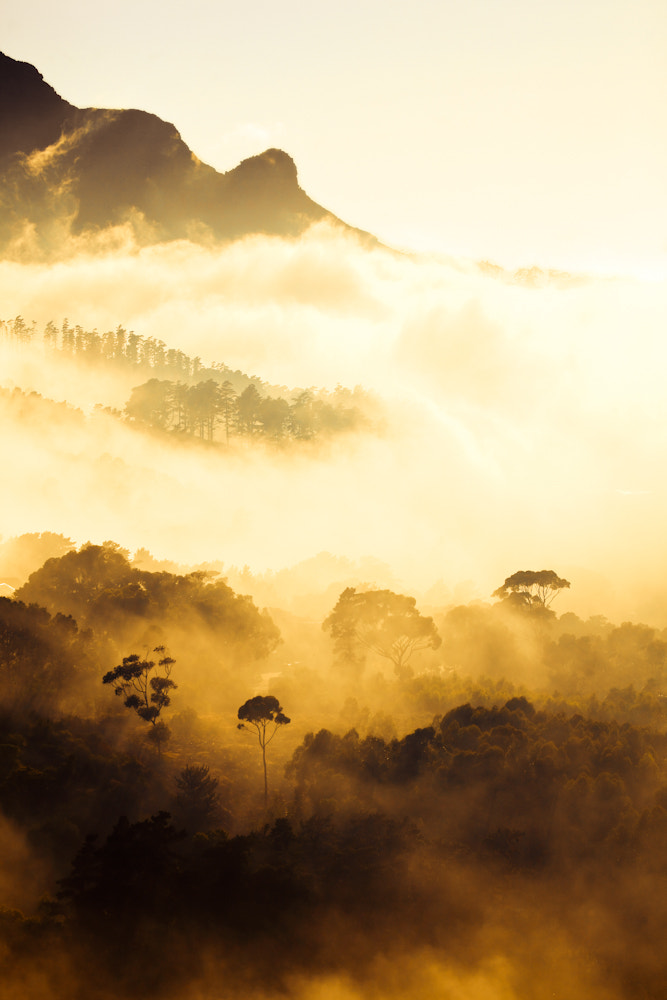 Photograph Trees in the Mist II by Mario Moreno on 500px