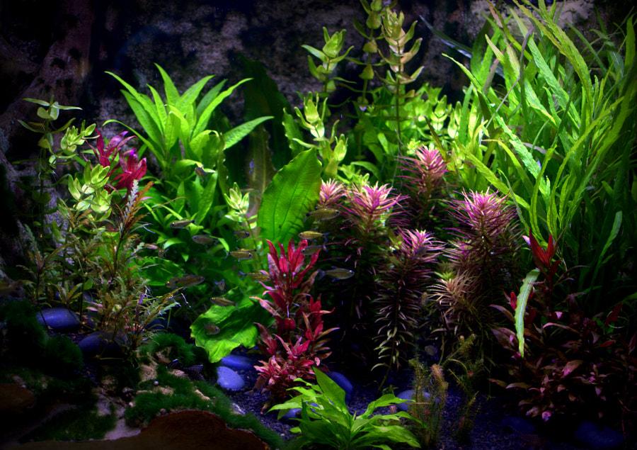 Тетра аквариум