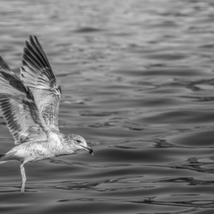 Let's Fly, Sony DSLR-A580, Sony DT 55-300mm F4.5-5.6 SAM (SAL55300)
