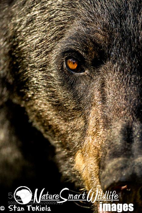 Photograph Black Bear face off by Stan Tekiela on 500px