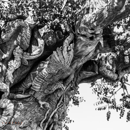 great tree, Canon EOS 60D, Canon EF 28-135mm f/3.5-5.6 IS