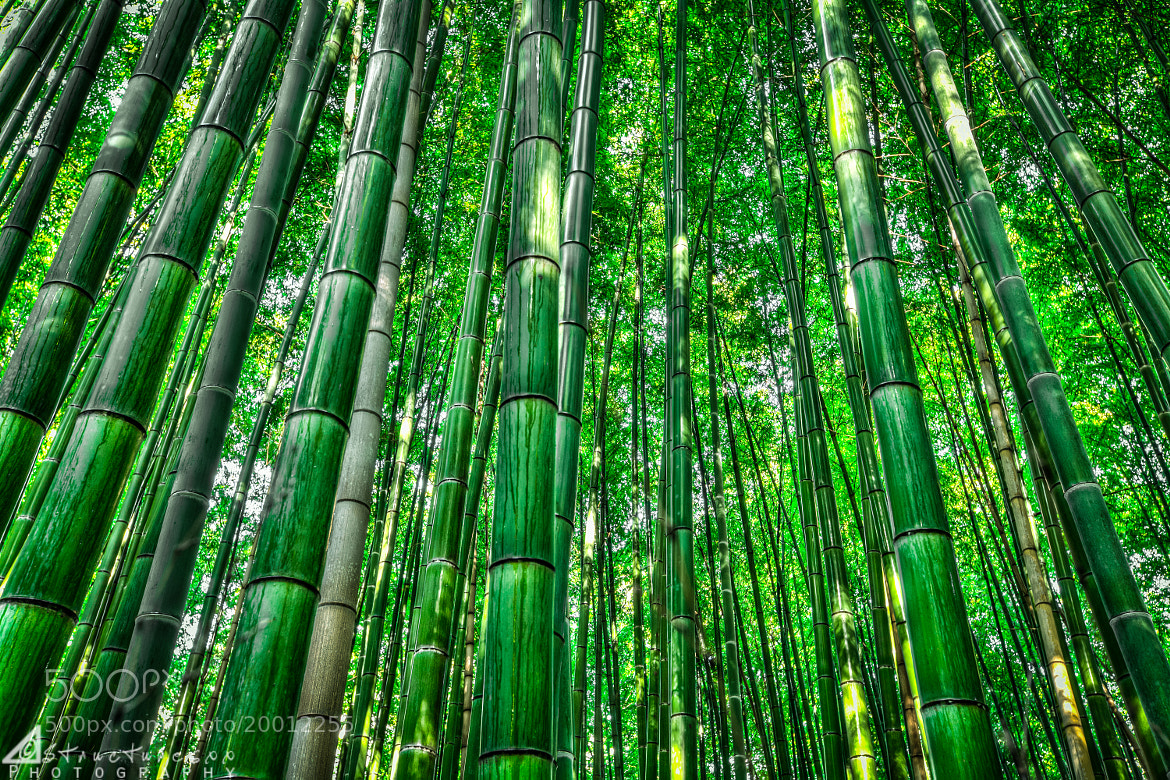 Photograph Bamboo Forest by Structuresxx  on 500px
