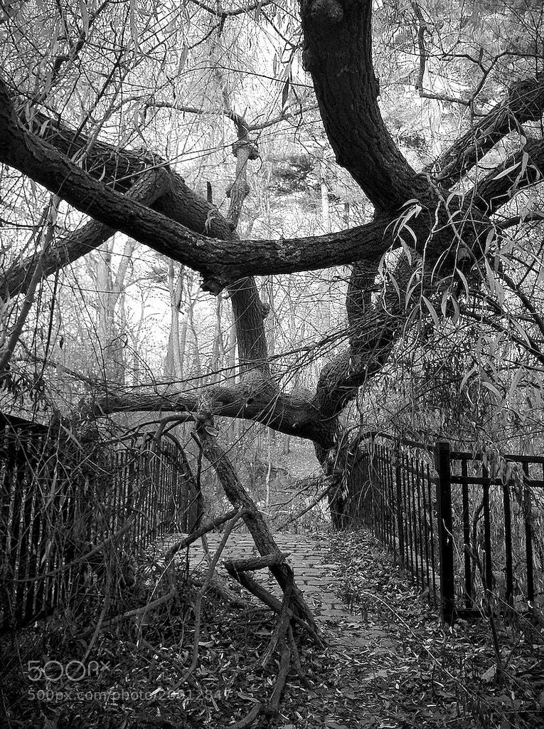 Photograph Jabberwocky by Mister Mark  on 500px