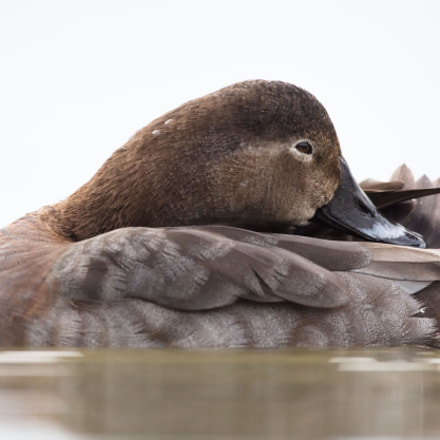 The nap, Canon EOS 5DS R, Canon EF 500mm f/4L IS