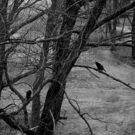 crow under the snow, Sony DSC-W200