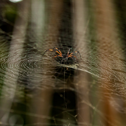 Surfing on the web, Canon EOS 500D