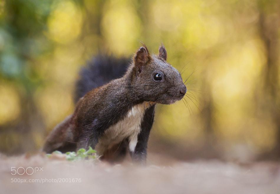 Photograph Curious Kiki by Boyan  Iliev on 500px