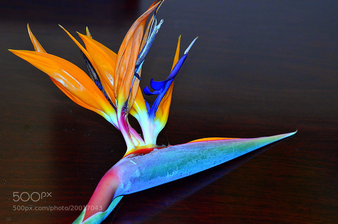 Photograph paradis bird flower by Adriana Ludwig Loebel on 500px