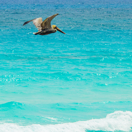 Pelican and Blue Waters, Canon EOS REBEL T3I, Canon EF-S 55-250mm f/4-5.6 IS II