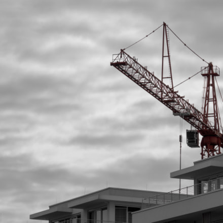 Crane , Sony ILCE-6000, Sony E 18-200mm F3.5-6.3 OSS LE