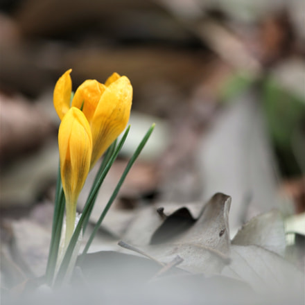 Early spring, Canon EOS 60D, Canon EF-S 55-250mm f/4-5.6 IS II